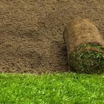 Turf and Grass Seed